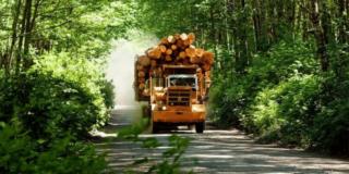 Full logging truck drives on logging road toward camera