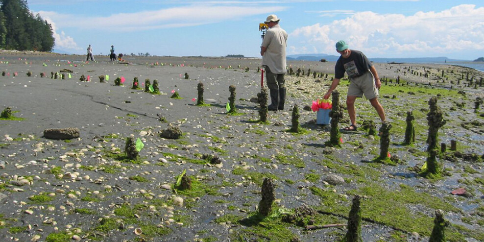 Scientists measure algae-covered posts sticking up from the shore on a sunny day.